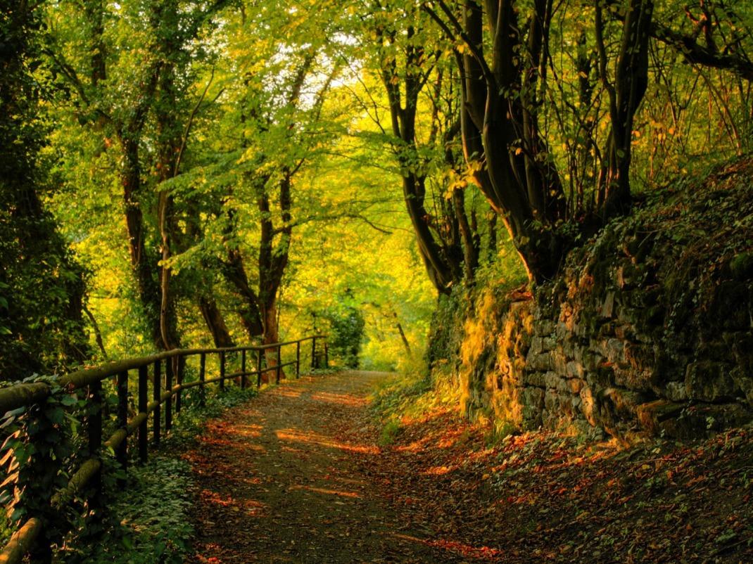 Paseo en el Bosque